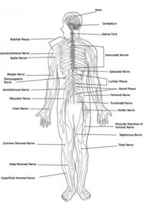 גישה רפואית לטיניטוס וסחרחורת